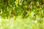 Falling foliage in forest — Stockfoto