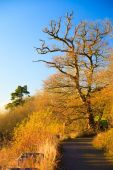 Landscape with the autumnal trees — Stock Photo