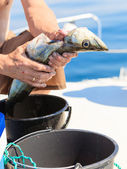 Saltwater fishing - man cleaning fish outdoor — Stock Photo
