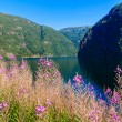 Landscape and fjord in Norway. — Stock Photo #59920337