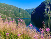 Landscape and fjord in Norway. — Stockfoto