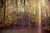 Sunbeams trough trees in park — Stock Photo