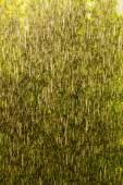 Rain outside window — Stock Photo
