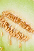 Sweet melon with pips — Stock Photo