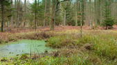 Forest bog with standing water. — Stock Photo