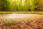 Forest swamp in autumn — Stock Photo