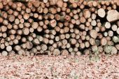 Logs piled up. — Stock Photo