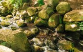 Stones in woods forest. stream in gdansk oliva park. — Stock Photo
