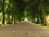 Bürgersteig zu Fuß Pflaster im Park. Naturlandschaft. — Stockfoto