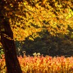 Autumn scenery in park — Stock Photo #71907295