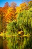 Lake and weeping willow — Stock Photo