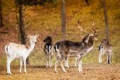 Herd of deer in the wild — Stock Photo