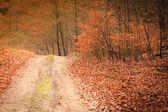 Country road in the forest — Stock Photo