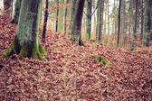 E autumn forest with trees — Stock Photo