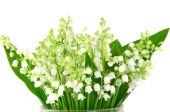 Lilies-of-the-valley — Stock Photo