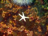 морская звезда — Стоковое фото