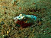 Conger eel — Stock Photo