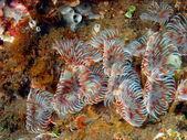 Tube worms — Stock Photo