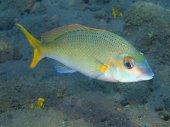 Peces coralinos — Foto de Stock