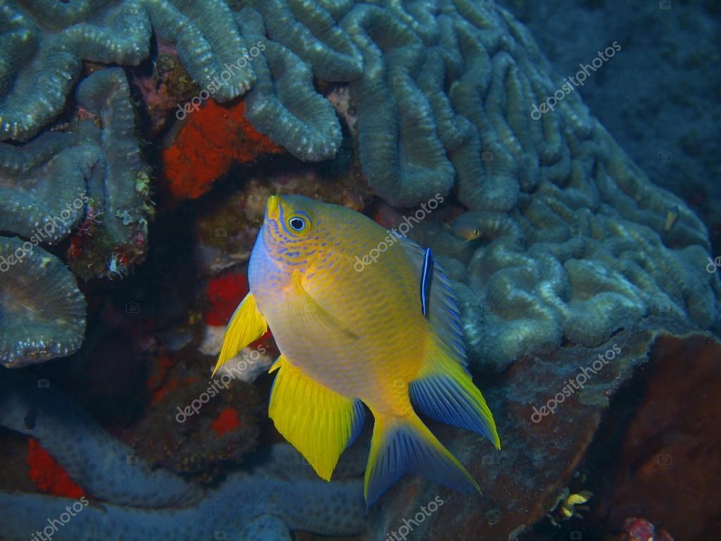 令人惊讶的海底世界的巴厘岛盆地,珊瑚鱼– 图库图片