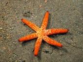 Starfish — ストック写真