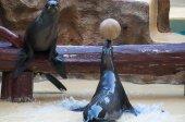 塩水の哺乳類をシールします。 — ストック写真