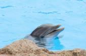 海豚游泳 — 图库照片