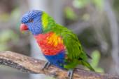 Parrots in their jungle  — Stock Photo