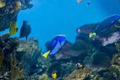 Vita sottomarina — Foto Stock