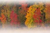 Autumn Deep Lake in Fog — Stock Photo