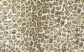 Brown and black leopard pattern. — Stock Photo