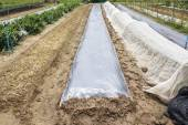 New plastic sheeting weed barrier in vegetable garden — Stock Photo