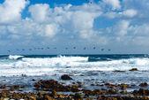 Flying migratory ducks Ocean — Stock Photo