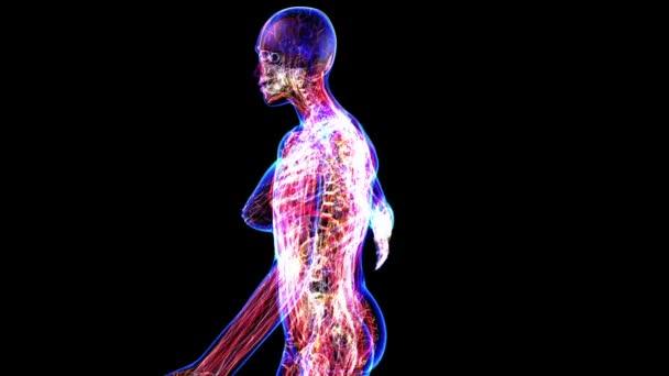 Женское тело видео анатомия фото 191-678
