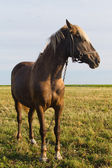 Young horse grazing in a pasture — Stock Photo