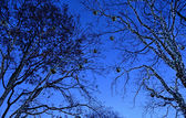 Night illumination of trees for Christmas — Stock Photo