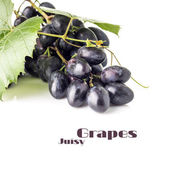Grapes cluster with grapevine isolated on white background. Blue ripe grape with copyspace — Photo
