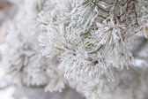 Christmas background. Frosted branch of pine — Stock fotografie