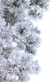 Frozen pine branches isolated on white. — Stock Photo