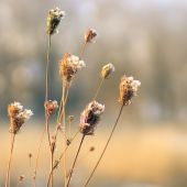 Frosted autumn flowers — Stock Photo