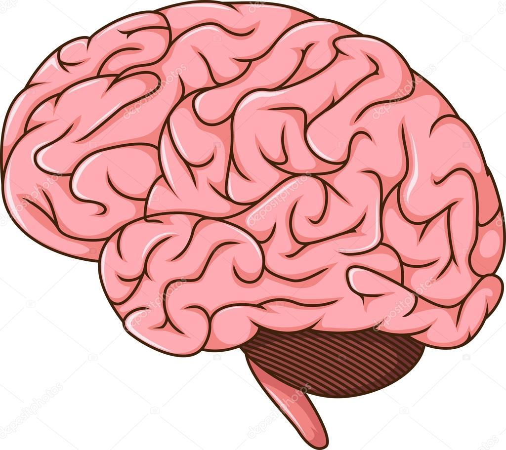 dibujos del cerebro humano � vector de stock