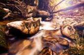 Vintage photo of river in forest — Stock Photo
