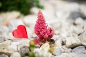 赤いハートとピンクの花 — ストック写真