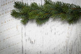 Green pine branches — Stock Photo
