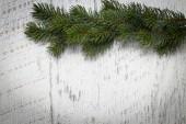 Ramos de pinho verde — Fotografia Stock