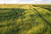 Sunny spring meadows — Stock Photo
