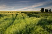 Idyll countryside view of lush meadows — Stock Photo