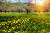 Beautiful meadow in the morning — Stock Photo