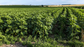 Agricultural green fields — Stockfoto