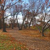 Autumn Essay In Silverwood Park - Minnesota — Stock Photo